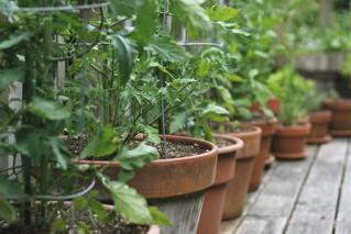 Blog - tomato row original