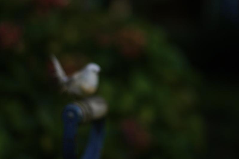 Blurred bird