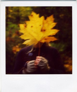 Pola dani in the magical forest
