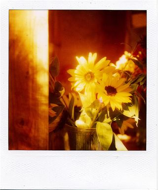 Pola sun in window_3