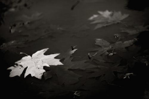 Fall leaves bw 1_2