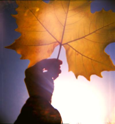 Fall leaf diana 2