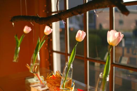Window tulips 1