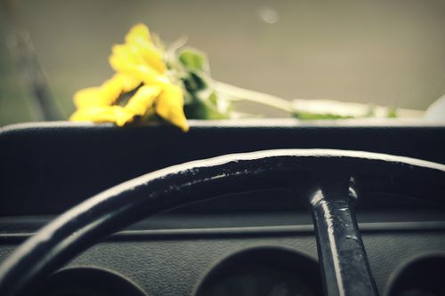 Dashboard sunflower 1