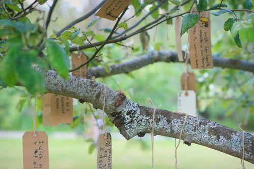 IMG_8196 wish tree branches