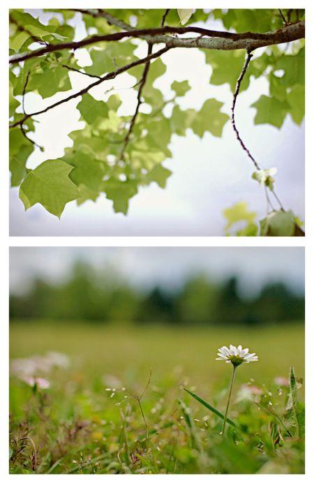 Picnic collage 3