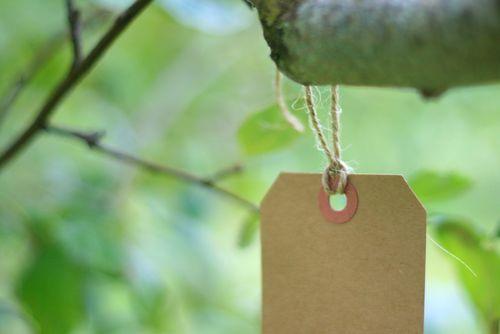Wish tree 8