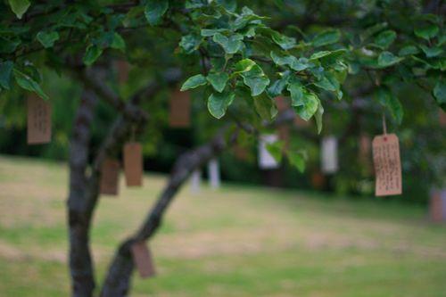 IMG_7393 wish tree first week