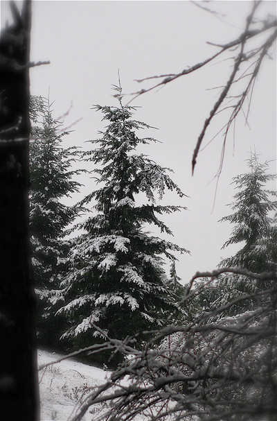 Backyardtree